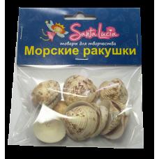 2191 Ракушка Асапикс виолакес  50гр
